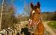 Susanna Nicoletti cria cavalls, una activitat que viu com una passió.