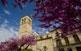El campanar de l'església de Santa Maria de Santa Coloma de Queralt és l'última part que s'hi construí, al segle XVII. Des de la plaça del Portalet, la torre es veu emmarcada per les branques florides dels arbres de l'amor, o arbres de Judea.