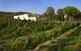 De les vinyes de petits cellers com el Mas Vilella, a la Bisbal del Penedès, en surten vins excepcionals.