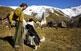 Jesús Caravaca fa molts anys que va deixar enrere la ciutat. Avui, els formatges que la Rosa Vilalta i ell produeixen viatgen carretera avall a la bossa dels turistes que arriben al poble de Gavàs.