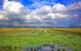 Entre tanta natura, els arrossars són un domini humà. A darrers d'octubre, amb les espigues segades, els camps regalen una varietat cromàtica increïble.