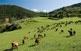 Al Baridà encara s'hi poden veure cabres i vaques pasturant, herba per plegar i parets de pedra seca.