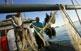 Un cop les barques de pesca ja han atracat al port de Vinaròs, s'inicia una nova ceremònia: la neteja de les xarxes i la seva preparació per l'endemà.