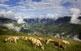Les vaques pasturen pels voltants de Prats de Molló, vila amb un nucli antic murallat que s'agrupa entorn de l'església de Santa Justa i Santa Rufina.