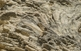 Detall d'una colònia de corall ramós del gènere Musismilia, a l'escull de Sant Sadurní.