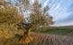 El paisatge penedesenc ha estat cultivat des de fa mil·lenis. A la foto, oliveres i vinyes a Can Raimundet.