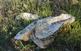 Les arades han fet aflorar elements com ostrèids del gènere Crassostrea.