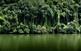 Verd, verd i més verd! No cal anar a manglars ni selves llunyanes per gaudir de la frondositat i la frescor d'una vegetació desbocada.