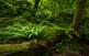 El sotabosc humit de l'alzinar de la Font Groga és ric en falgueres però també en animals consumidors dels glans d'alzines i roures, com els esquirols, els tudons i els senglars.
