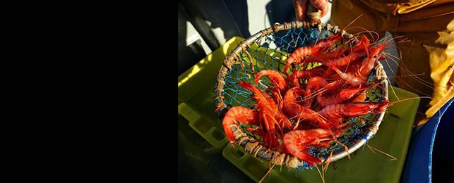 Gamba, marisc, Tarragona, Costa Daurada, gastronomia