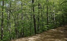 Sant Hilari Sacalm crea un itinerari terapèutic al bosc de Serra d'Heures