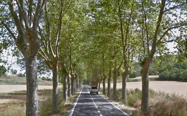 Carretera arbrada de l'Estany