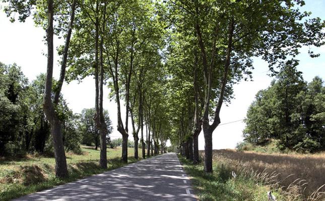 Carretera arbrada de Sant Agustí de Lluçanès