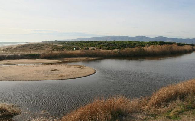 Les maresmes del delta del Llobregat
