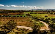 Camps de vinya del Penedès