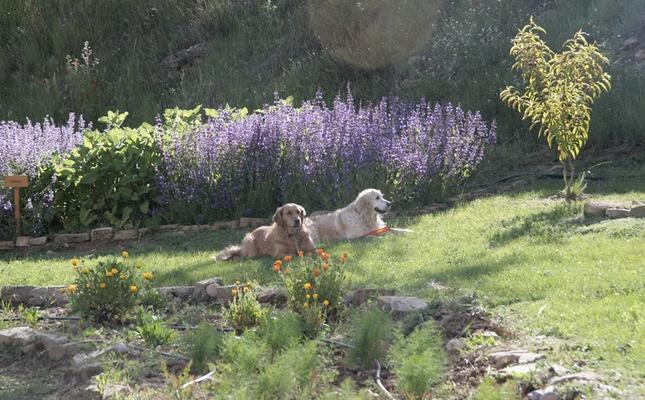 Plantes aromàtiques al Parc de les olors