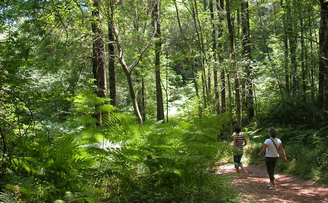 Camí de Sant Segimon, al Montseny