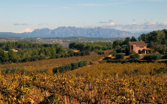 Les vinyes de la plana de l'Eudald, amb Montserrat a l'horitzó - Jordi Avellaneda