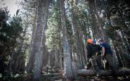 Imatge de l'estada ambiental de l'any passat al massís de l'Orri, al Pallars Sobirà