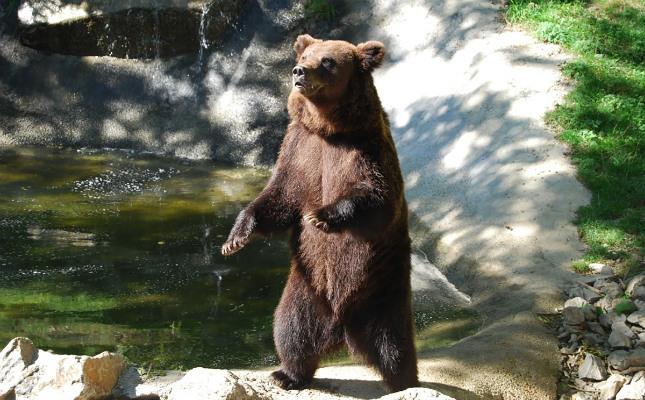 Un ós al Molló Parc