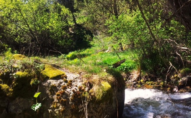 Bosc de Meranges