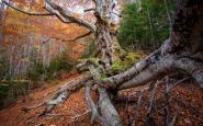 Els colors de la tardor al Bosc de Gresolet