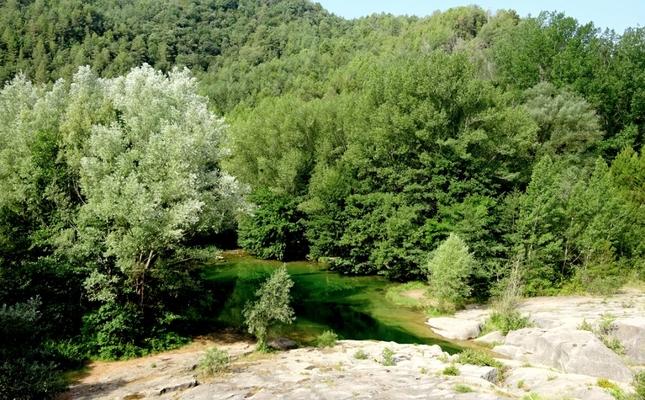 La vegetació esdevé molt densa al pas del riu Llobregat