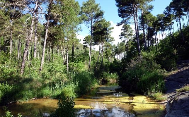Vegetació humida a la riera de Navel