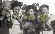 El ViLab reivindica el passat vitivinícola de Sant Cugat del Vallès