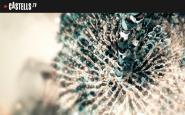 Imatge de la plataforma Castells.tv