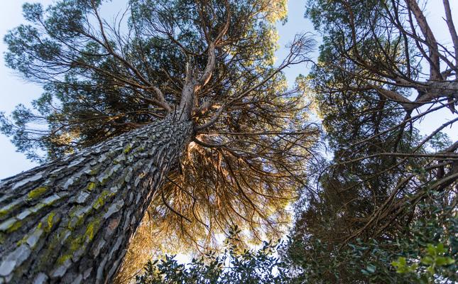 Bosc de Can Fornaca