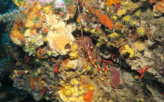 Crustaci al fons marí del litoral català