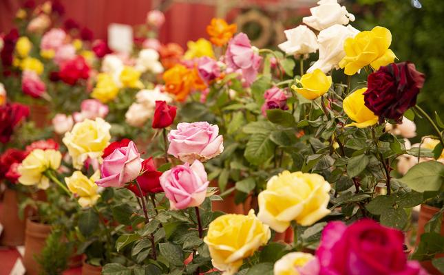 Expo Nacional de Roses Sant Feliu