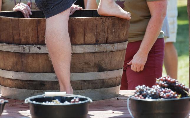 Trepitjar el raïm és fonamental per a l'elaboració del vi