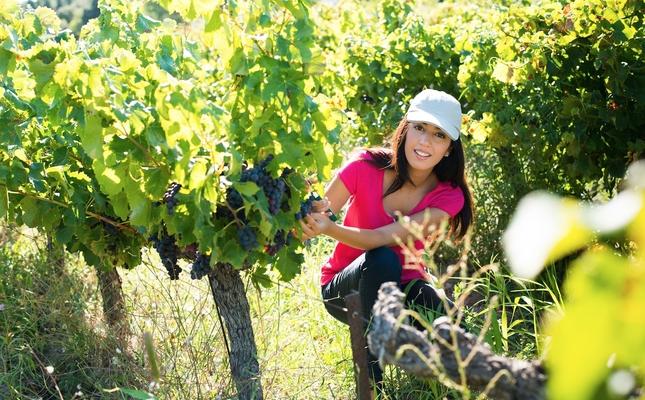 Podràs participar en moltes activitats vinculades a la vinya i a la verema