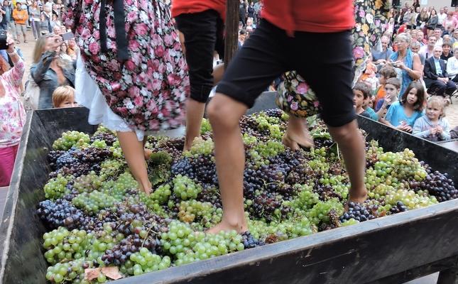 Trepitjada de raïm a la Festa de la Verema d'Alella