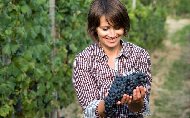 Els participants podran veremar entre vinyes de bon matí
