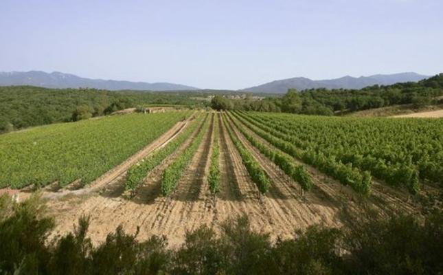 Vinyes de Capmany, a l'Empordà