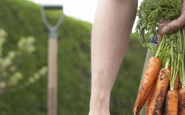 Informa't sobre agricultura i alimentació sostenible