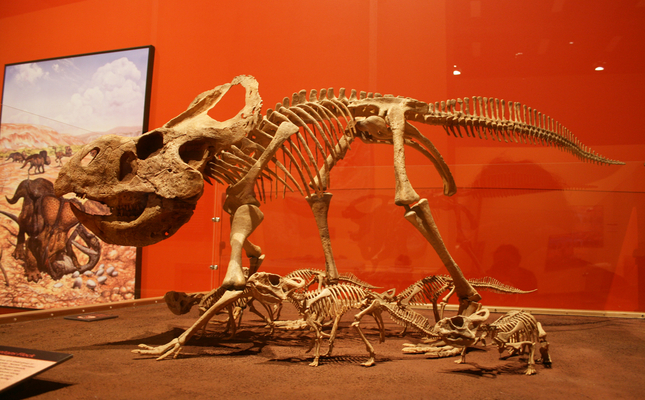 Mostra de l'exposició 'L'eclosió del passat: ous i cries de dinosaures'