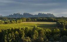 Paisatge de les vinyes DO Pla de Bages amb Montserrat a l'horitzó.
