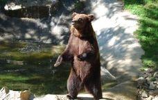 Un ós al Parc d'Animals de la vall de Camprodon