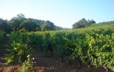 Vinyes de les Bodegues Abadal