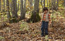Ruta per buscar bolets al bosc