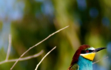 II Curs d'Especialista Universitari en Turisme de Fauna