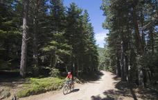 Els boscos de Sant Joan de l'Erm