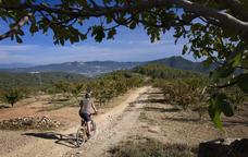 Muntanyes de cirerers a Torrelles