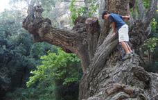 Aires mediterranis a la font de la Cuitora i el bosc del Paradís