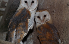 Visita al centre de fauna salvatge de la masia Camadoca