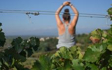 Cos i ment a les vinyes